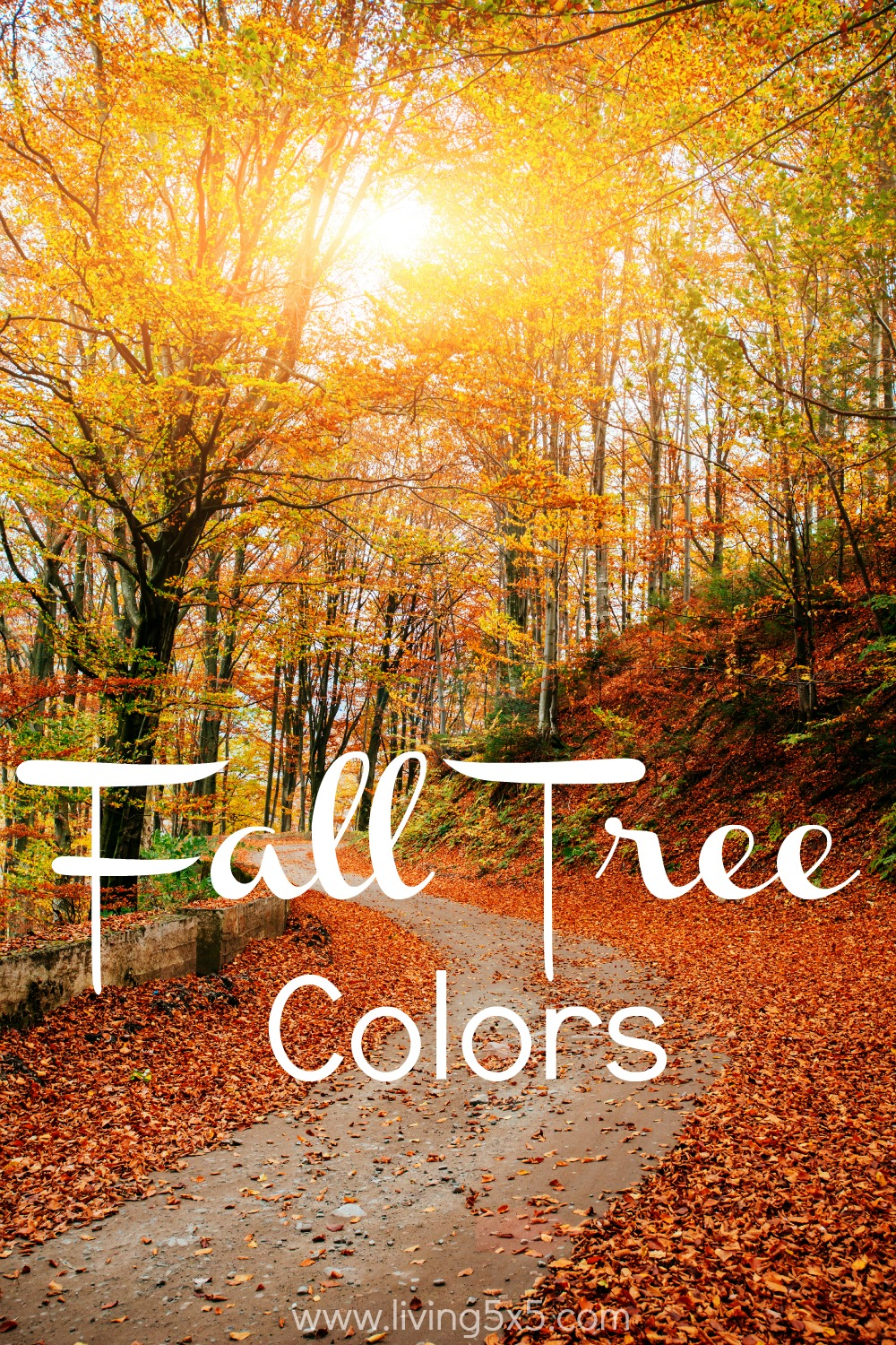 What makes you smile this time of year? It's starting to feel like Fall, and I just love all the fall tree colors.