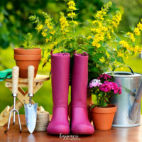 Top 7 Reasons to Garden