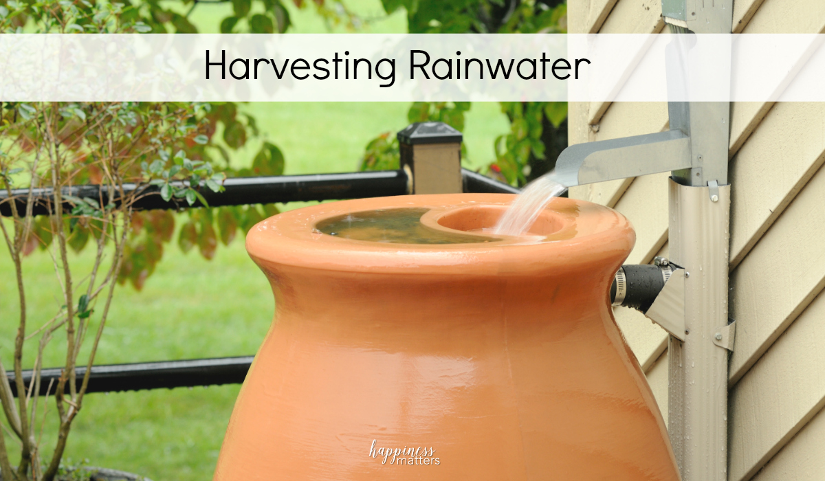 You don't have to be dealing with a drought to enjoy the sustainability benefits of harvesting rainwater. If you are in a drought, then you know that the hassle of alternating watering days can wreak havoc on your garden and landscaping. It's now a great time to take advantage when it rains.