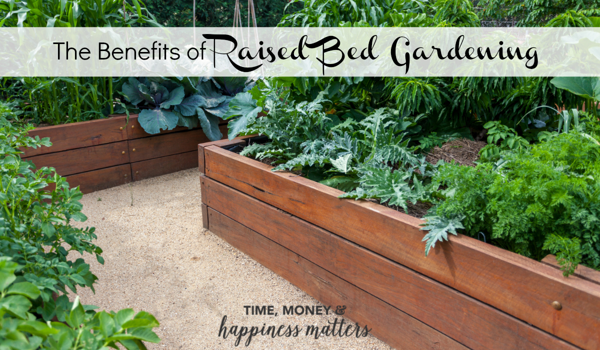 Learn more about the benefits of raised bed gardening and start your own.